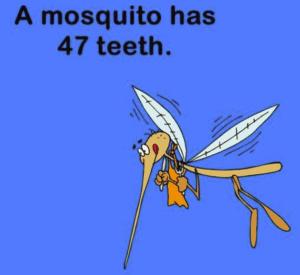 sarasota dental facts