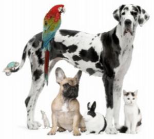 smile sarasota pets animal love